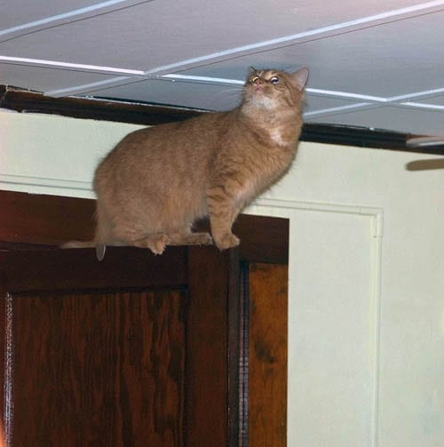 A pet sitter can make sure kitty stays safe.