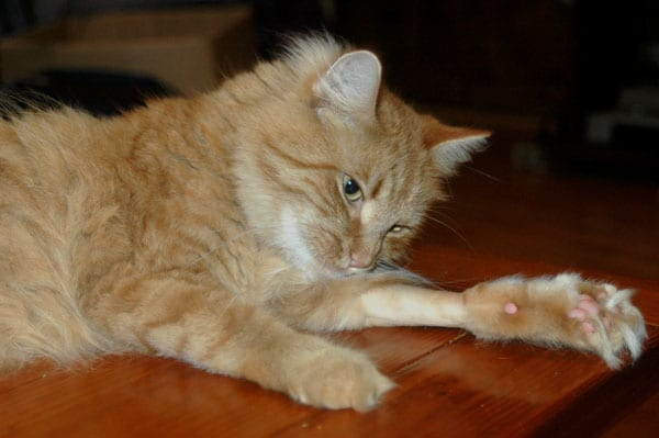 When your cat needs meds, its imperative to find a dependable pet sitter.