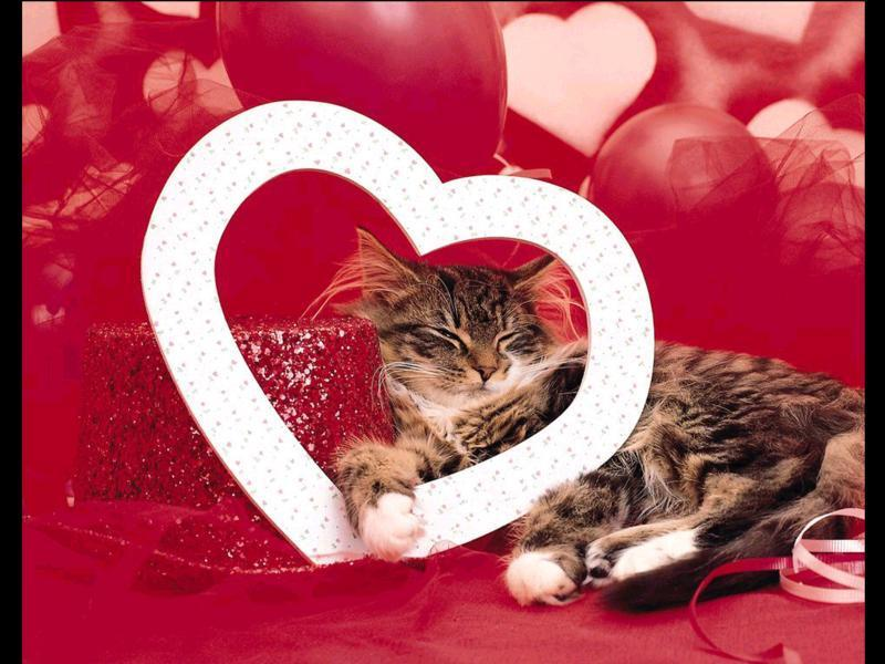 Catnip Toys For Valentine S Day : Tell your cat you love them every day not just valentine