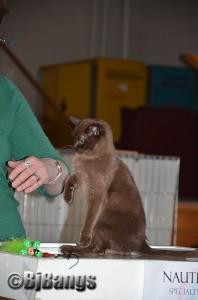 2013 NauTICAts Cat Show (26)