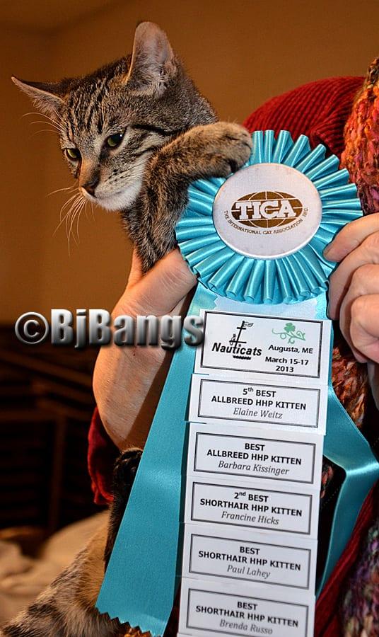 kitty with ribbon