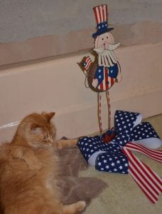 cat celebrates Veterans Day.