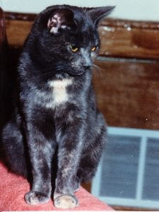 Smoky had a great life, living to be almost 20..