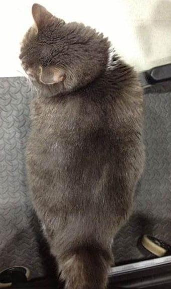 Hills Neutered Male Cat Food