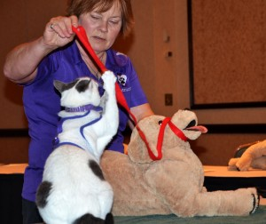 Arden Moore and Zeki teach pet first aid