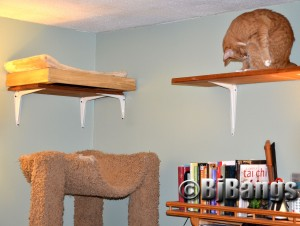 This kitty finds refuge in being high above the dogs and other cats on this cat walk.