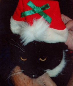 Timid cat Clyde doesn't know what to think about his Santa hat.