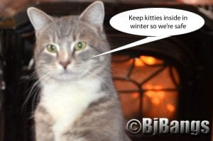 Blizzard warning - stay safe inside, humans and kitties