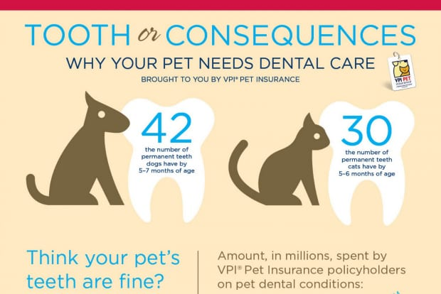 February is Dental Health Month & for cat owners it's ...