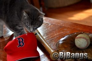 Kitty says he's a real Red Sox fan