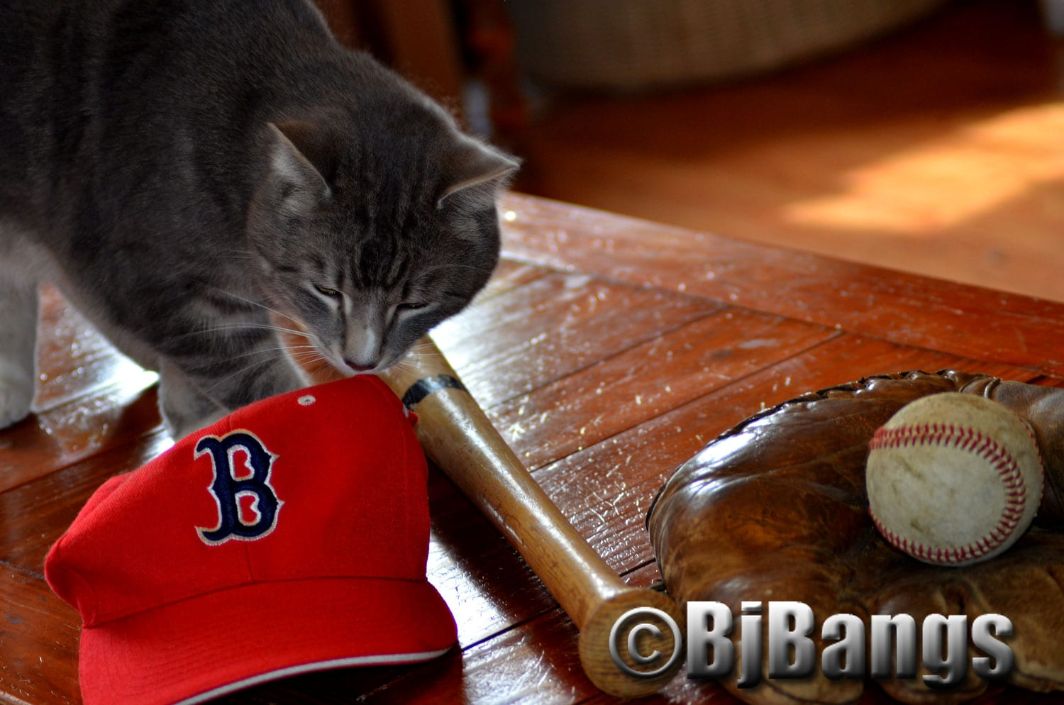 Cat gets ready to bat. Maybe he'll hit a much-needed home run for the #Boston Red Sox