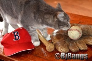 Kitty Lenny check out the baseball. Should he try catching?