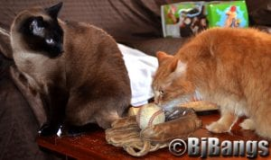 Cats decide what baseball position they'd like to play