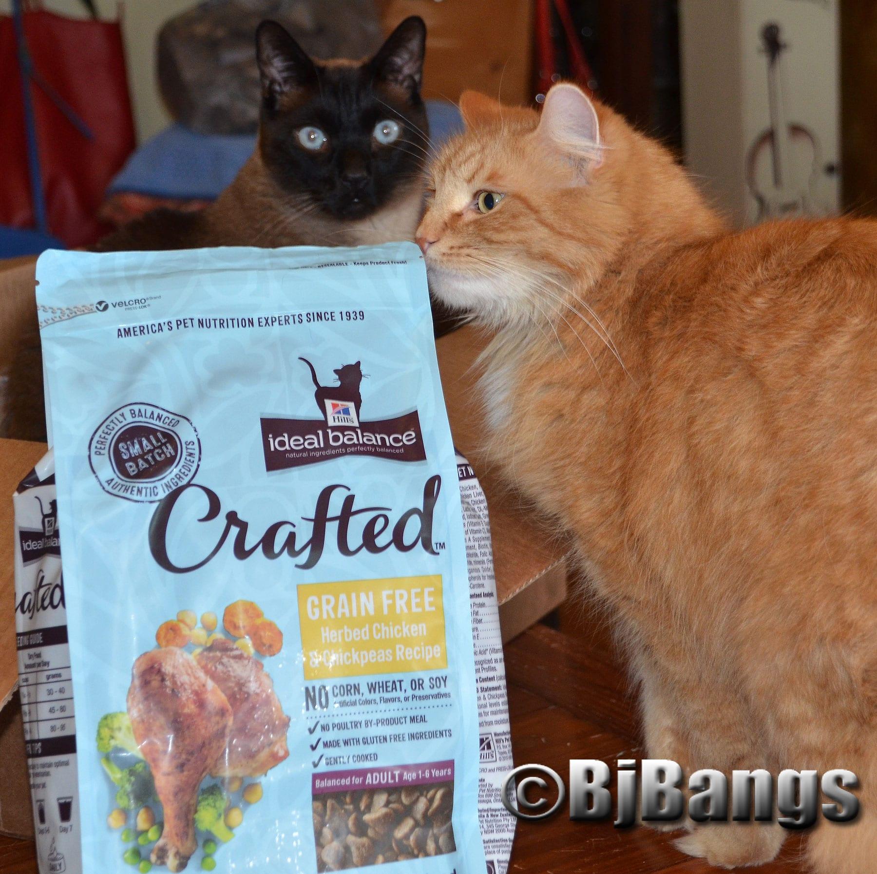 Can Cats Eat Buckwheat