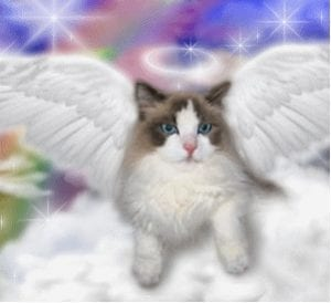 can cats amp our pets go to heaven 47 of american pet