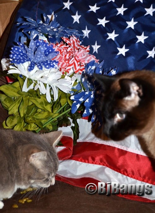 Cats pay tribute to the American flag