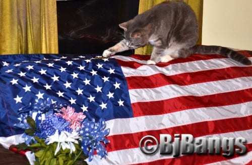 Cats, Lenny, 'Oh yes, let s celebrate our flag and the Fourth of July