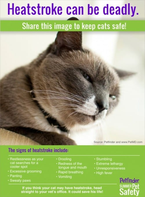 Keep kitty safe from heat stroke this summer (Infographic courtesy of PetFinder.com)