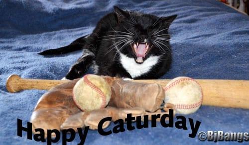 Happy Caturday! I'm no longer MIA