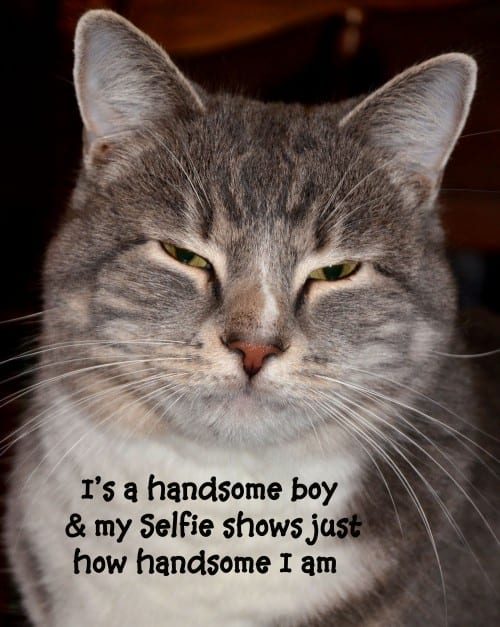 I's a handsome boy kitty, and my #selfie shows just how handsome I am