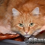 Sunday Selfie: Kitty in a basket