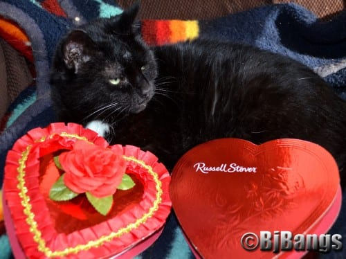 Valentine's Day: Cupid's finds my true love - a cat