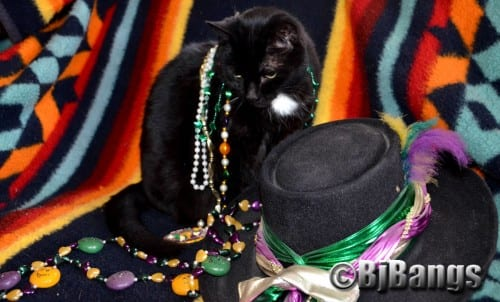Cat Pink Collar checks out the Mardi Gras goodies