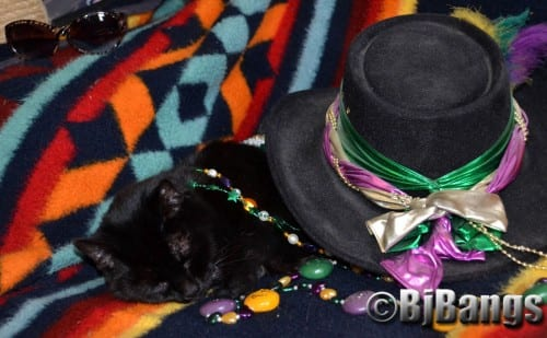 Cat Pink Collar has celebrated a bit too hard for Mardi Gras. She resting up for the Grand Finale on Tuesday
