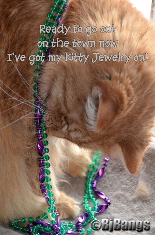 Kitty puts on necklace, getting ready to go out for a night on the town.
