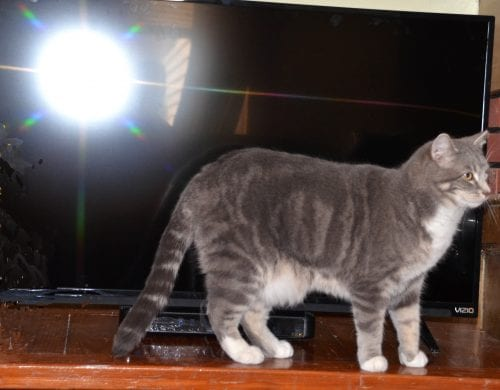 Curious, is this kitty in the livingroom or on the moon