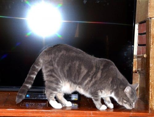 Space age cat enjoys big screen TV