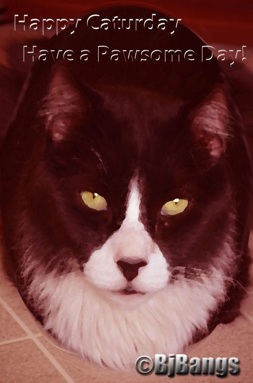 Caturday with sepia and spherized art effects