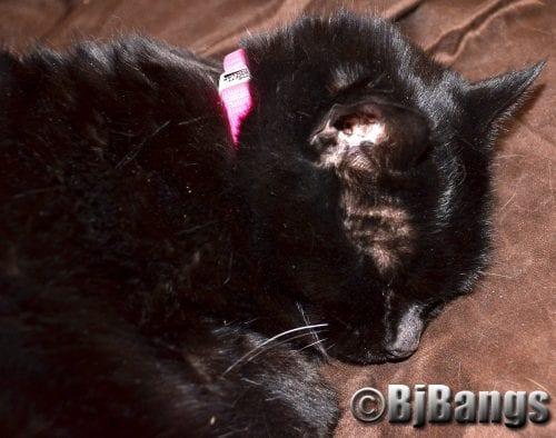 Cat gets a new collar