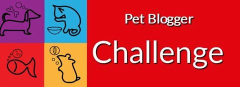 Pet Blogger Challenge Blog Hop