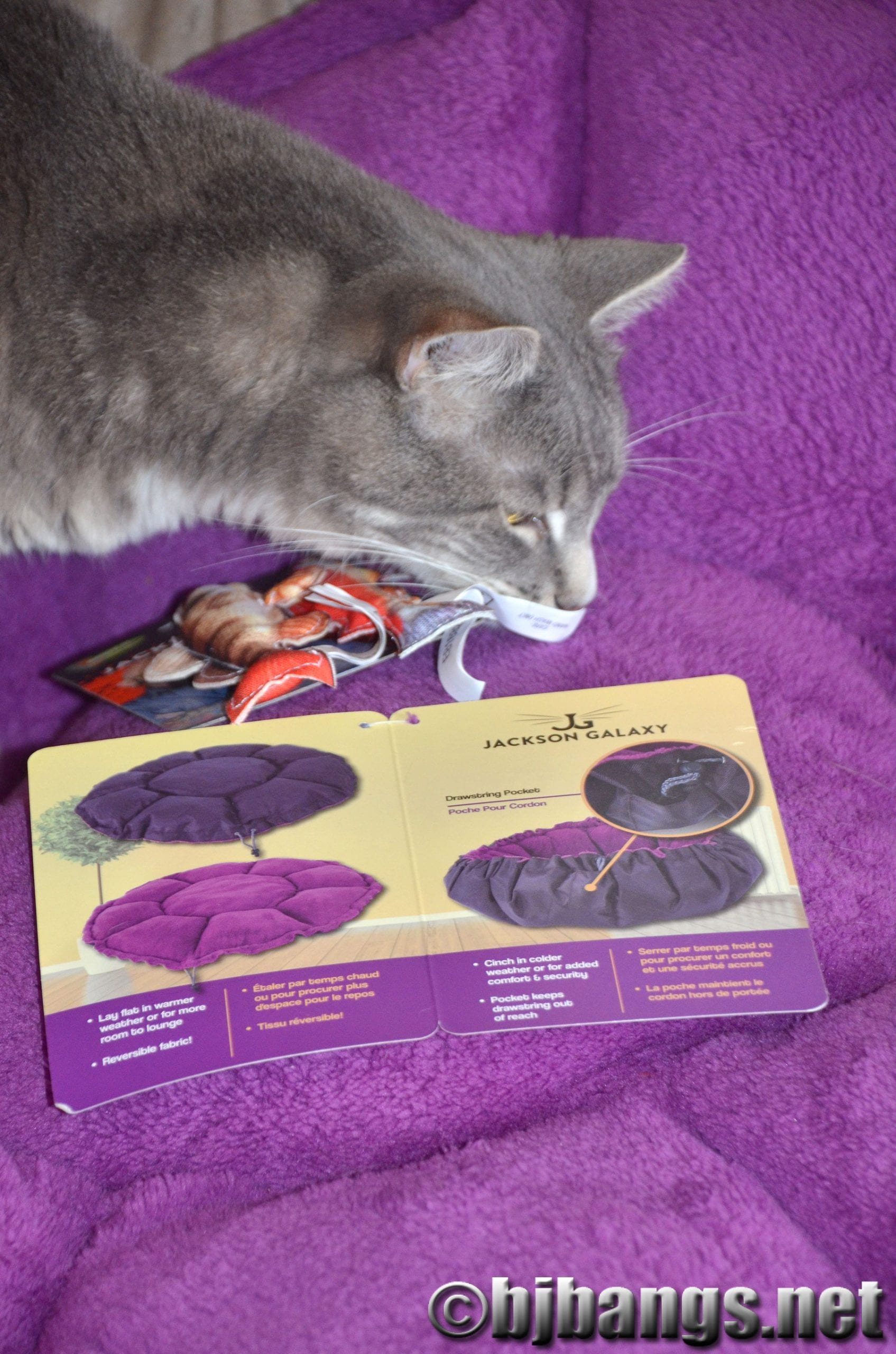 Jackson galaxy petm 24 paws for reflection for Jackson galaxy cat products