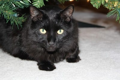 Black Cats - The Story of the Myth