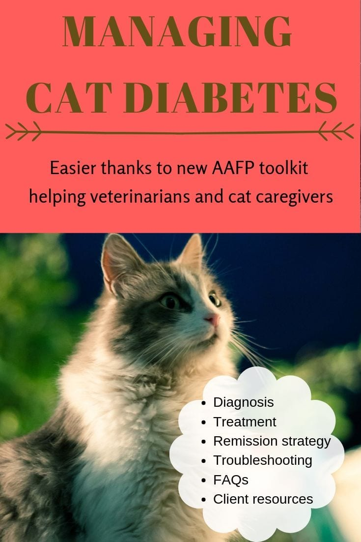 Image of Managing cat diabetes just got easier thanks to a new online toolkit developed by AAFP